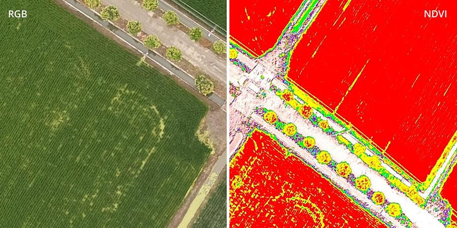 [ドローンレンタルネット]P4 Multispectral RGB映像とNDVI映像