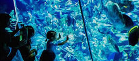 [ドローンレンタルネット]FIFISH V6 水中ドローン 教育