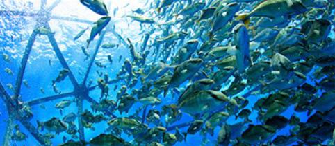 [ドローンレンタルネット]FIFISH V6 水中ドローン 漁業養殖